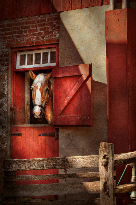 Calvin Art Print featuring the photograph Animal - Horse - Calvins House by Mike Savad