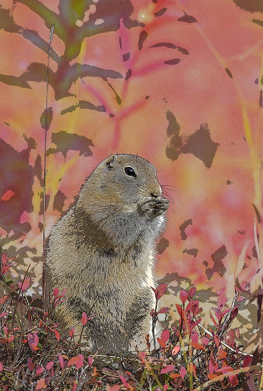 Abstract Art Print featuring the photograph Arctic Ground Squirrel In Autumn Colors Abstract by Tim Grams