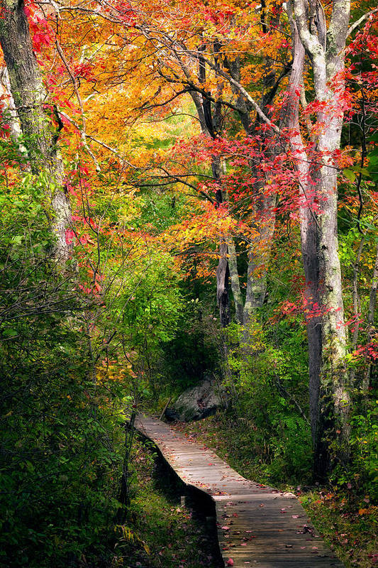 Autumn Print featuring the photograph Autumn Boardwalk by Bill Wakeley