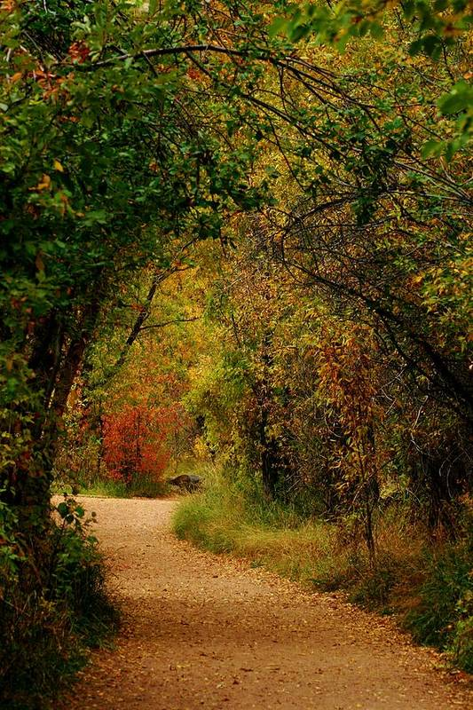 Autumn Art Print featuring the photograph Autumn Path by Denise Newman