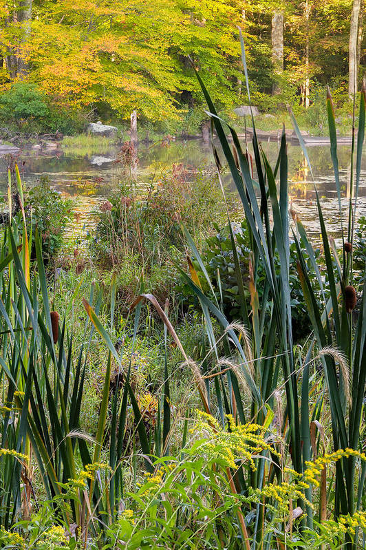 Swamp Art Print featuring the photograph Autumn Swamp by Bill Wakeley