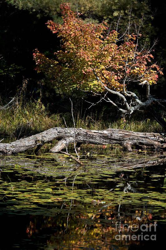 Art Print featuring the photograph Autumn Swamp by Cheryl Baxter