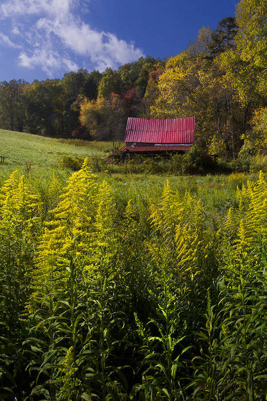 Barn Art Print featuring the photograph Autumn Wildflowers by Debra and Dave Vanderlaan