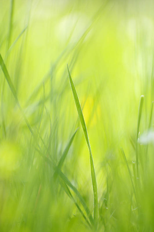 Spring Art Print featuring the photograph Blades Of Grass - Green Spring Meadow - Abstract Soft Blurred by Matthias Hauser