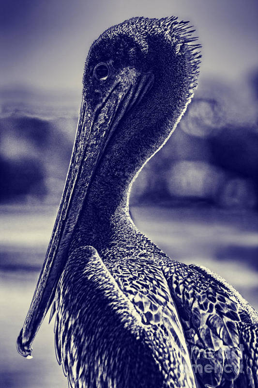 Abstract Pelican Art Print featuring the photograph Blueprint by Kristy Ollis