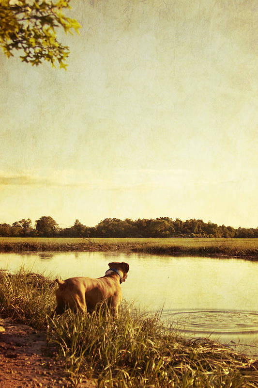 Boxer Art Print featuring the photograph Boxer Dog By The Pond At Sunset by Stephanie McDowell