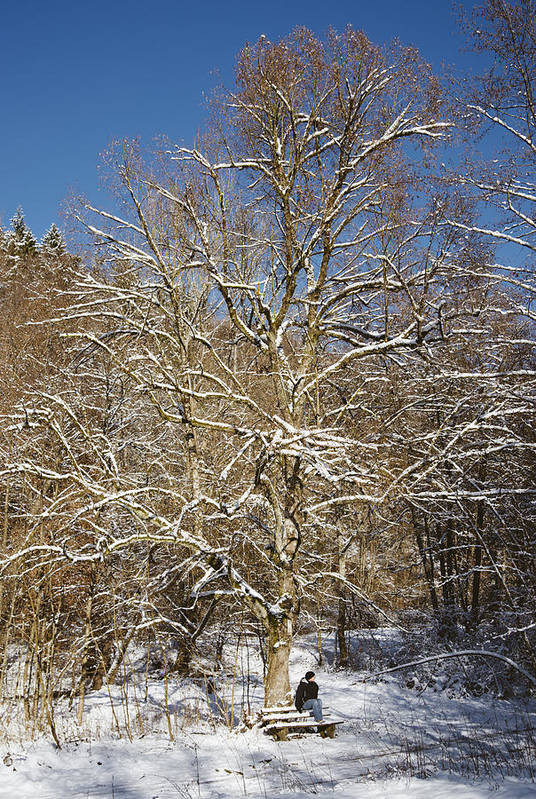 Winter Art Print featuring the photograph Break Under A Large Tree - Sunny Winter Day by Matthias Hauser