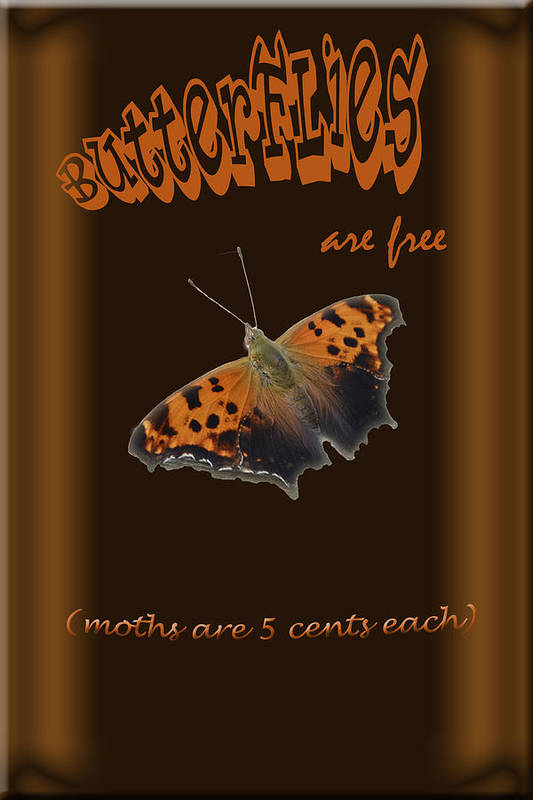 Digital Art Print featuring the photograph Butterflies Are Free by Larry Bishop