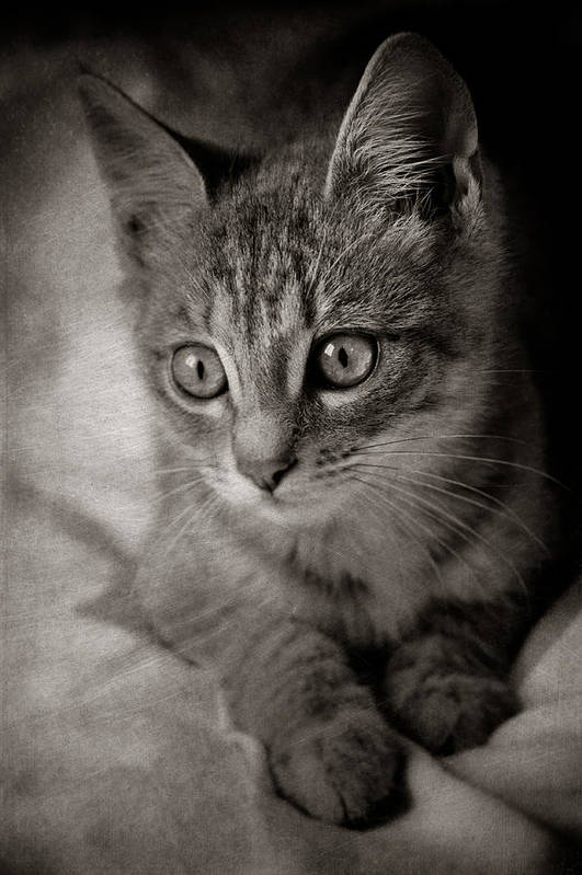 Loriental Art Print featuring the photograph Cat's Eyes #05 by Loriental Photography