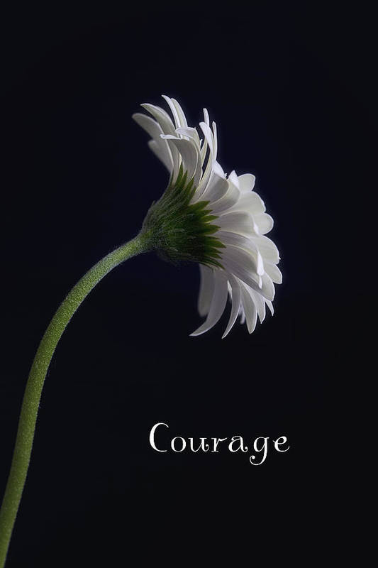 Kim Andelkovic Photography Art Print featuring the photograph Courage by Kim Andelkovic