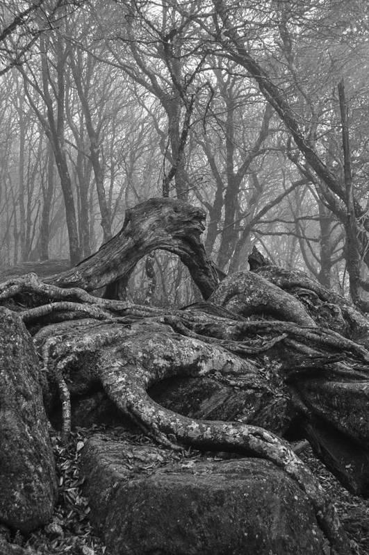 Roots Art Print featuring the photograph Craggy Roots by Matt McClintock
