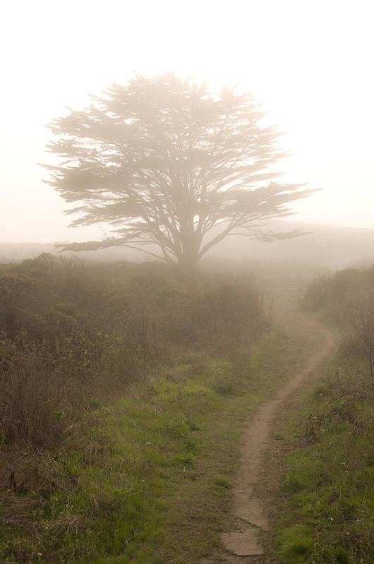 Fogscape Art Print featuring the photograph Cypress Tree In The Edge Of A Coastal Fog by Scott Lenhart
