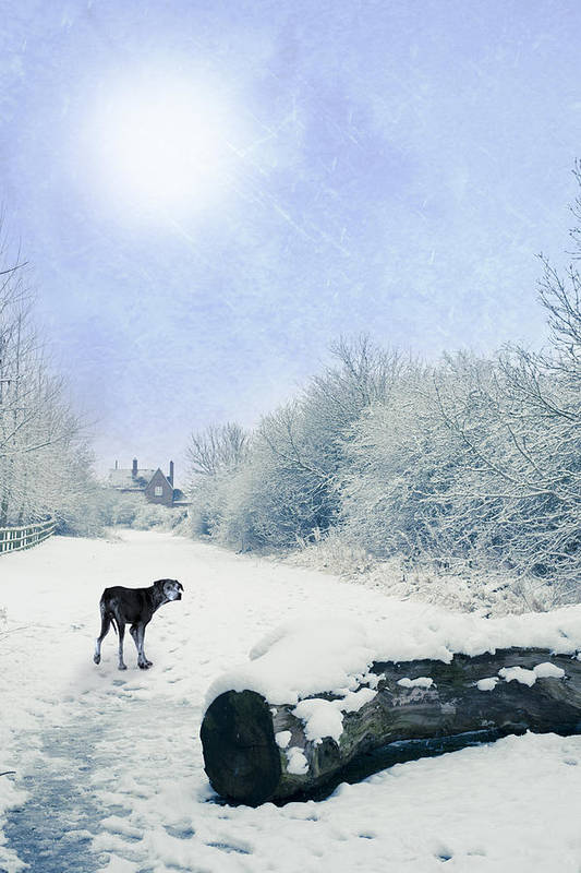 Alone Art Print featuring the photograph Dog Looking Back by Amanda Elwell