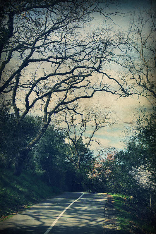 Lafayette Reservoir Recreation Area Art Print featuring the photograph Down That Path by Laurie Search