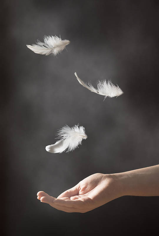 Floating Art Print featuring the photograph Floating Feathers by Amanda Elwell