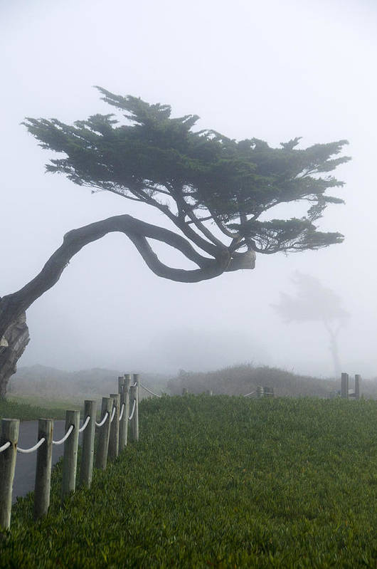 Fogscape Art Print featuring the photograph Foggy Coastal Trail In Miramar by Scott Lenhart