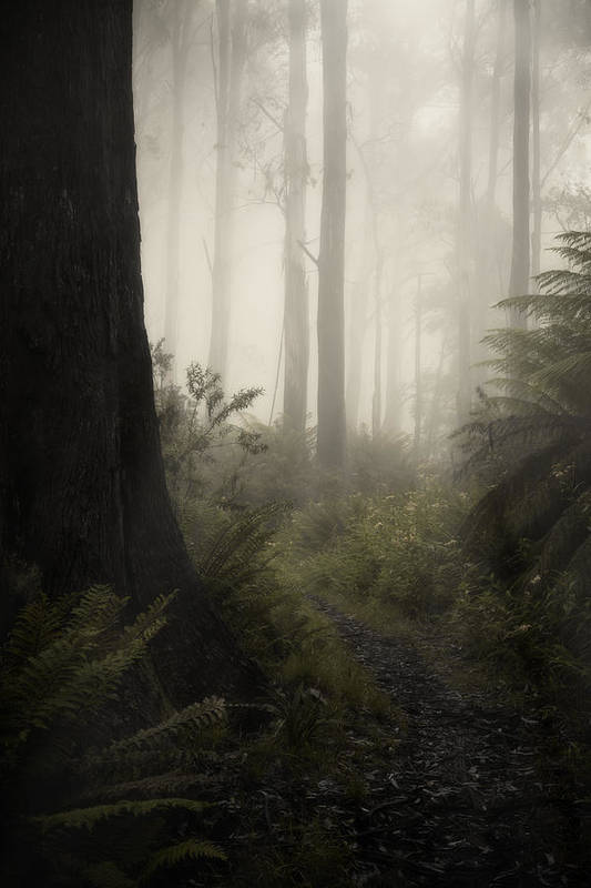 Fog Art Print featuring the photograph From Darkness by Amy Weiss