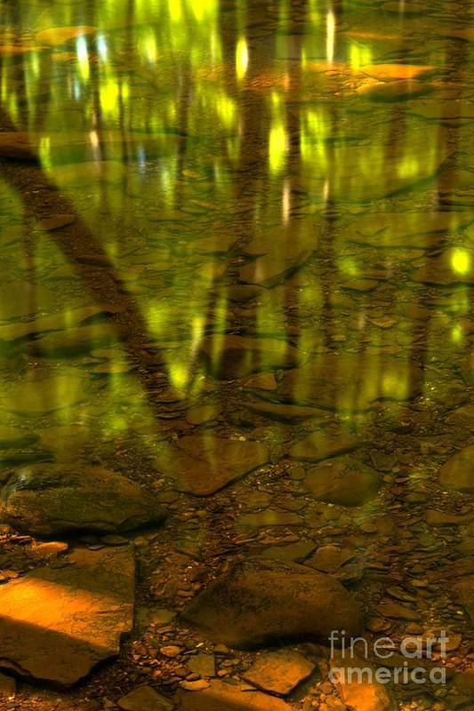 Tree Reflections Art Print featuring the photograph From River Rocks To Forest Reflections by Adam Jewell