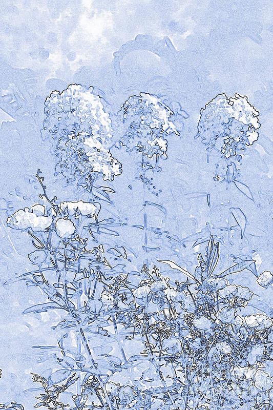 Abstracted Print featuring the drawing Garden Blue by Diana Tyson