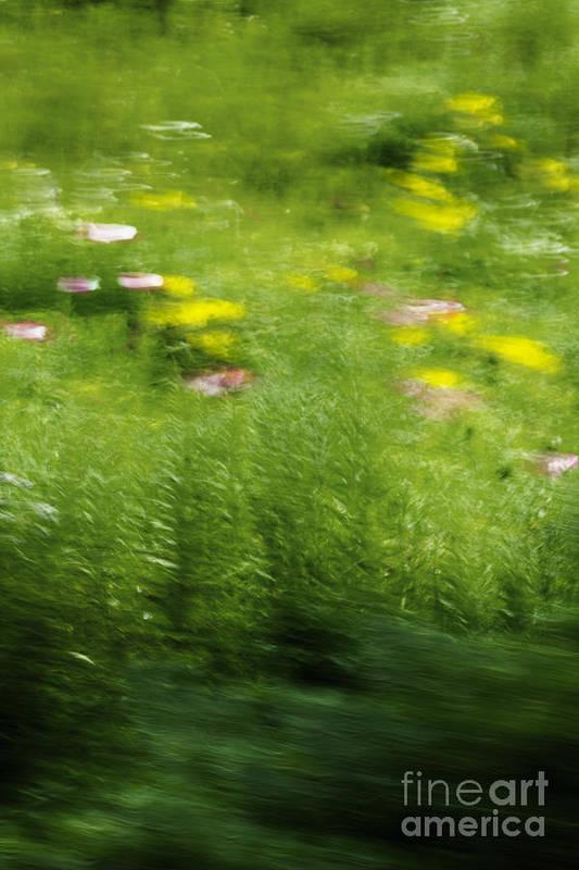 Abstract; Blur; Blurry; Blurred; Garden; Green; Yellow; Pink; Flowers; Grasses; Nature; Lovely; Beautiful; Summer; Serene; Rural; Flower Garden; Floral; Botanic Art Print featuring the photograph Garden Impressions by Margie Hurwich