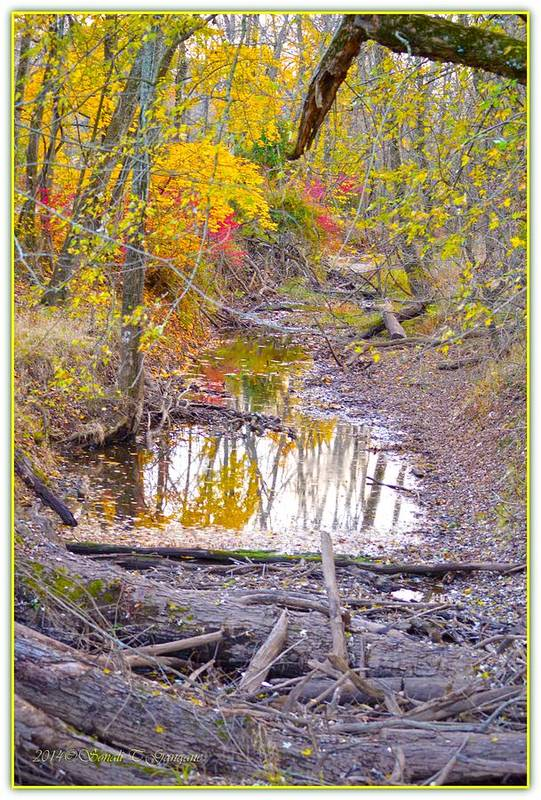 Reflections Art Print featuring the photograph Gift Of Autumn by Sonali Gangane