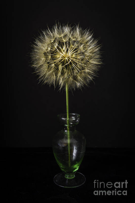 Goats Beard In Vase Art Print featuring the glass art Goat's Beard In Vase by Mitch Shindelbower