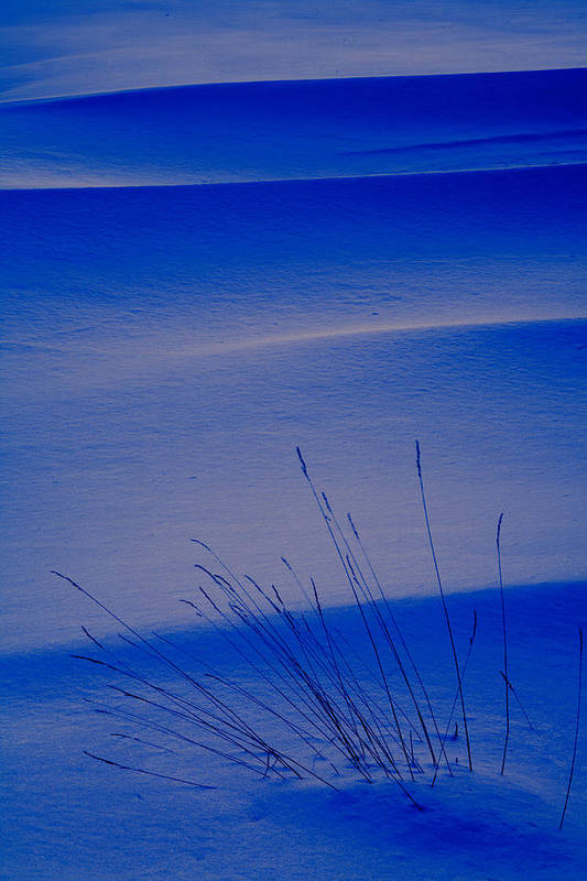 Chilly Art Print featuring the photograph Grasses And Twilight Snow Drifts by Irwin Barrett