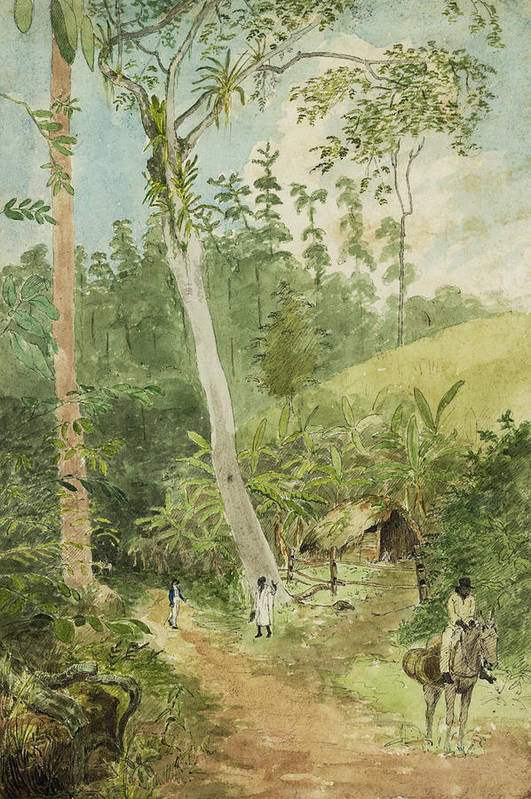 Watercolor Painting Print featuring the painting Hut In The Jungle Circa 1816 by Aged Pixel
