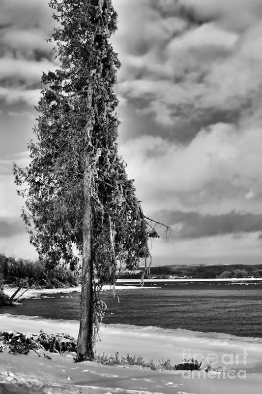 Ice Art Print featuring the photograph Ice Coated Tree by Louise Heusinkveld