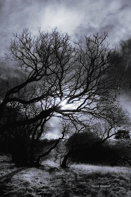Legend Art Print featuring the photograph Ichabod's Pathway by Donna Blackhall