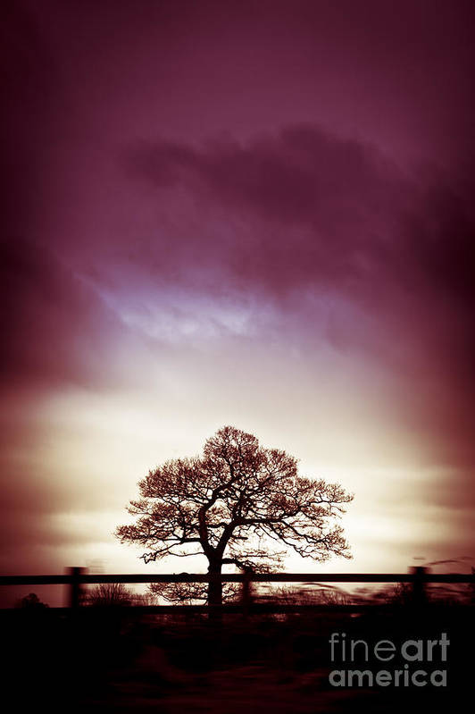 Silhouette Art Print featuring the photograph January Dusk by Jan Bickerton
