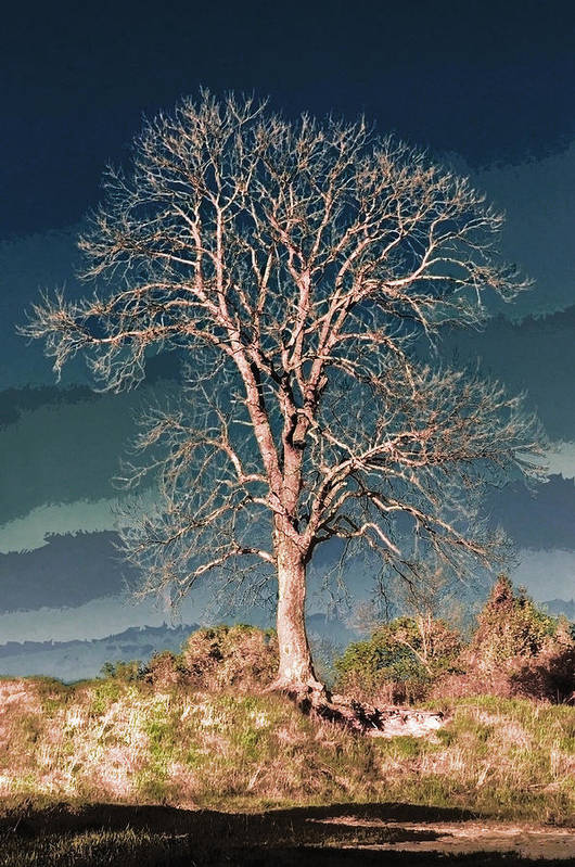 Flora Art Print featuring the photograph King's Tree by Yevgeni Kacnelson
