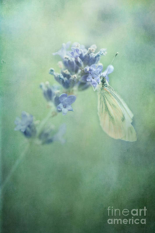 Butterfly Print featuring the photograph Land Of Milk And Honey by Priska Wettstein