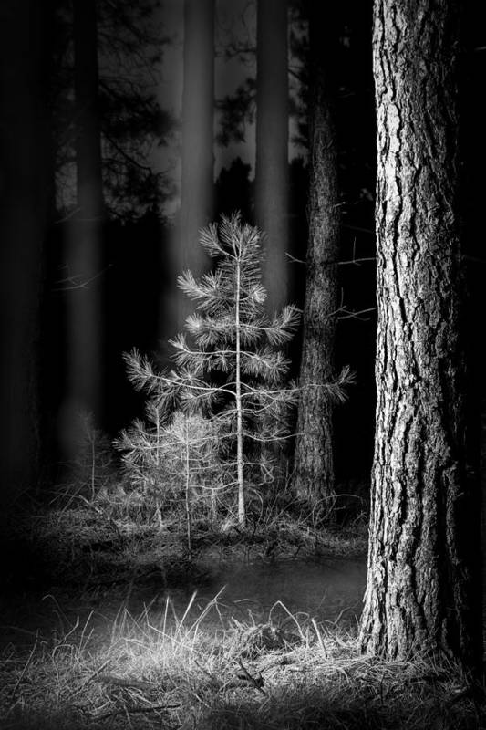Beauty In Nature Print featuring the photograph Lightpainting The Pine Forest New Growth by Dirk Ercken