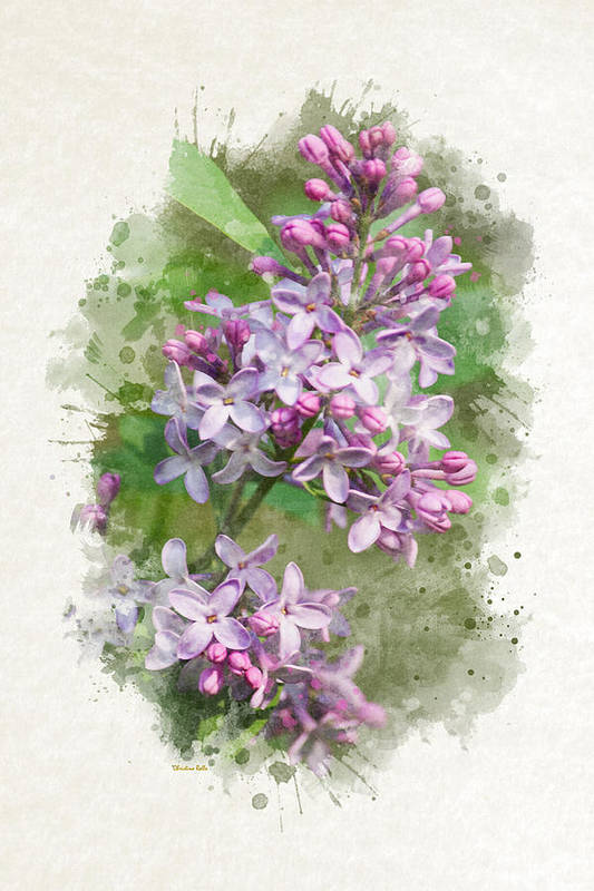 Lilac Art Print featuring the mixed media Lilac Watercolor Art by Christina Rollo