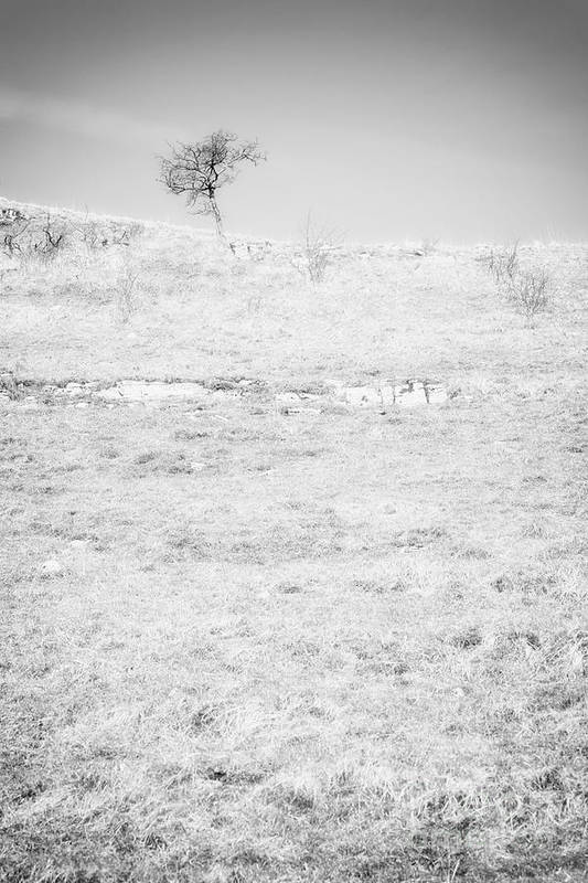 Tree Art Print featuring the photograph Little Tree On The Hill - Black And White by Natalie Kinnear