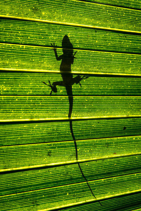 Florida Art Print featuring the photograph Lizard On The Other Side by Marc Novell