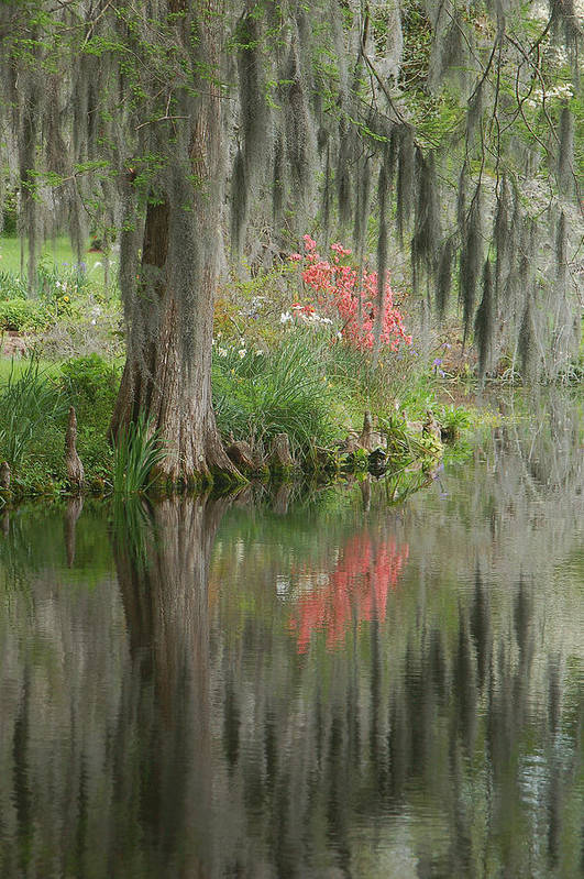 Lowcountry Art Print featuring the photograph Lowcountry Series I by Suzanne Gaff