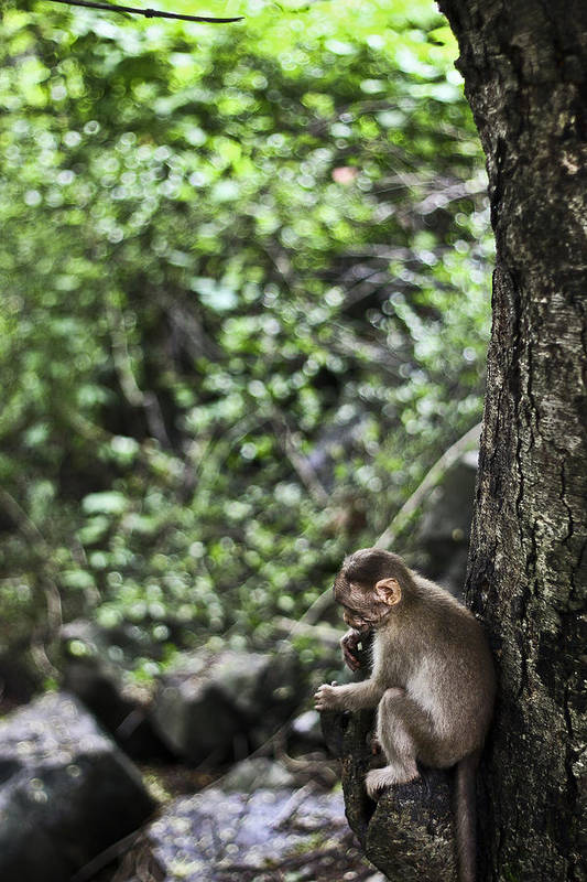 Monkey Art Print featuring the photograph Monkey Business by Rohan Lakhlani