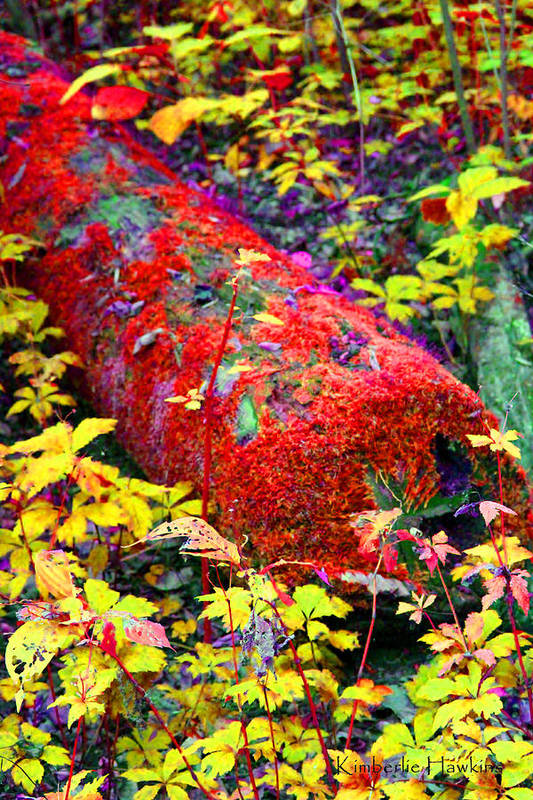 Reds Art Print featuring the photograph Mossy Log In Red by Kimberlie Hawkins