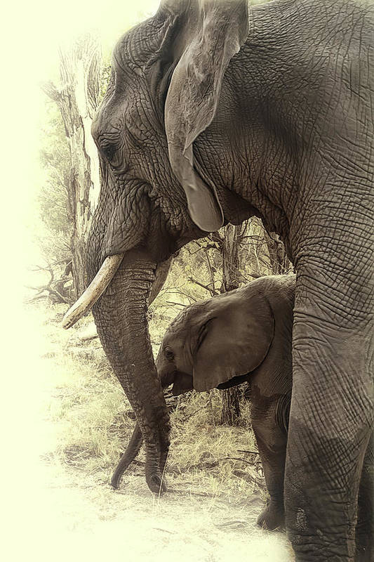 Elephant Art Print featuring the photograph Mother And Daughter by Lyn Darlington