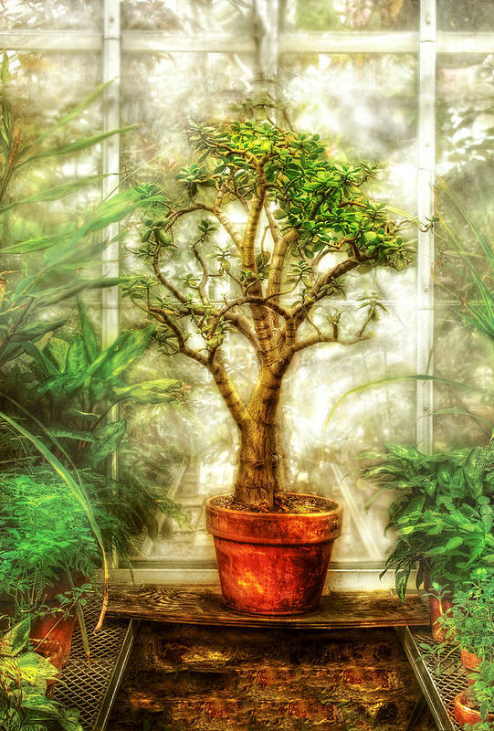 Tree Art Print featuring the photograph Nature - Plant - Tree Of Life by Mike Savad