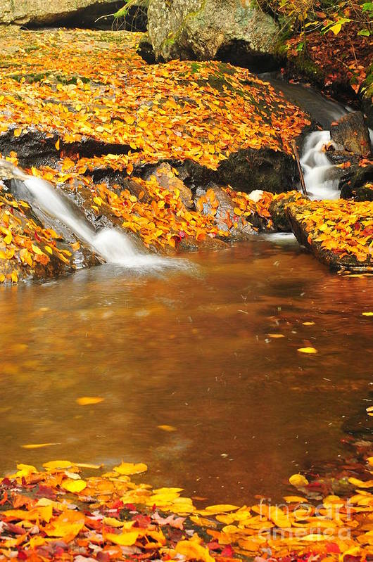 Mountain Brook Art Print featuring the photograph New Hampshire Stream by Catherine Reusch Daley