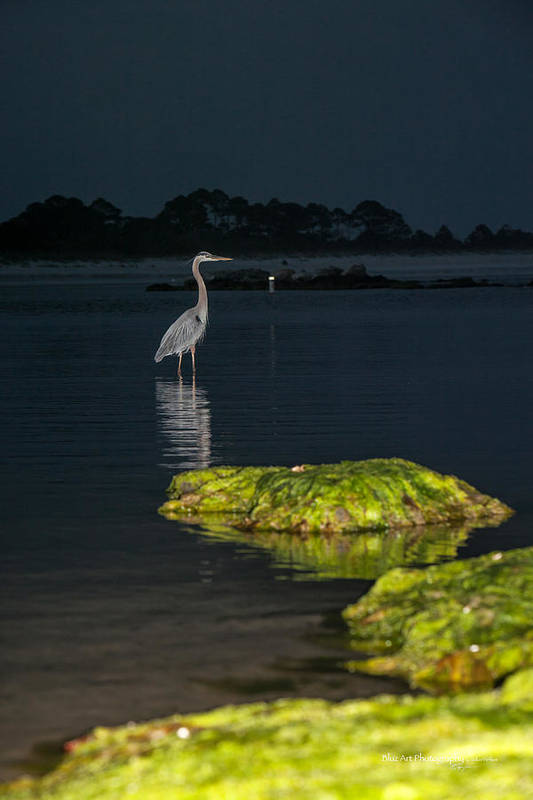 Heron Print featuring the photograph Night Stalker by Volker blu Firnkes
