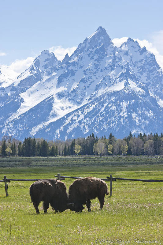 Grand Tetons Art Print featuring the photograph No Butts About It by Charles Warren
