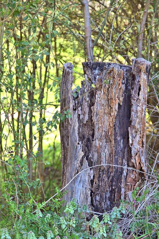 8190 Art Print featuring the photograph Old Stump by Gordon Elwell