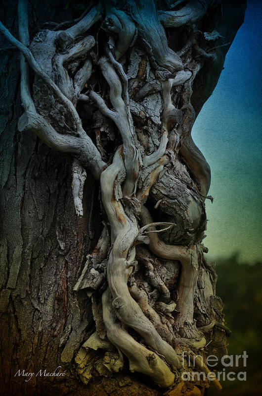 Baden Bei Wien Art Print featuring the photograph Old Vine by Mary Machare