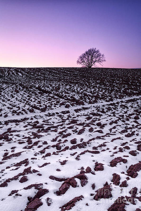 Snow Art Print featuring the photograph One More Tree by John Farnan