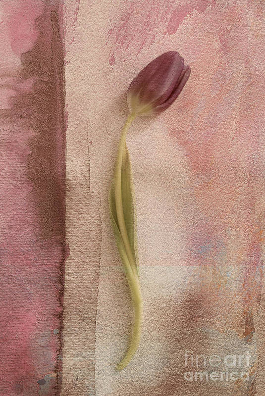 Tulip Art Print featuring the photograph One - S03et03 by Variance Collections