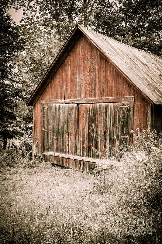 Woods Art Print featuring the photograph Out By The Woodshed by Edward Fielding
